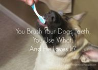 You Brush Your Dogs