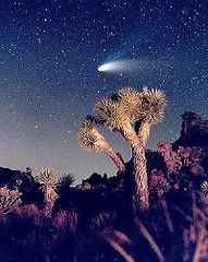 Wow! Joshua Tree at...
