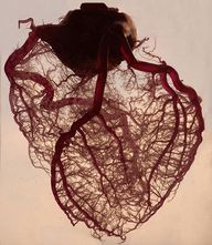 """The human heart str"