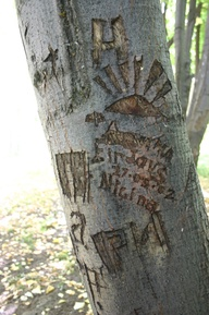 graffiti on trees -