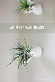 DIY-ify: Air Plant W