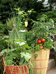 Container vegetable