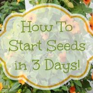 How To Start Seeds I