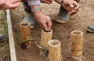 Bamboo Growing Pots.