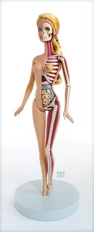 Anatomical Barbie by