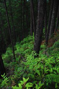 Forest. | japanesetr