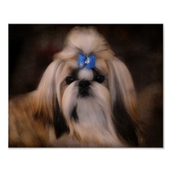 Shih Tzu Dog Portrai