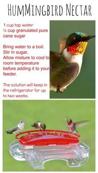 DIY hummingbird nect