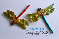 Nature Dragonfly Cra