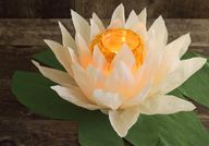DIY paper flower lum