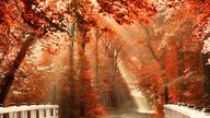 Autumn, nature and w