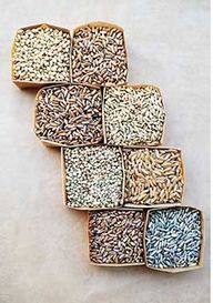 Sprouted Grains from