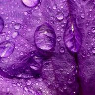 A rainy PurpleMonday