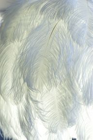 plumes