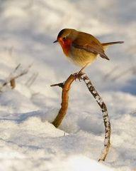 Winter Bird... | Cos