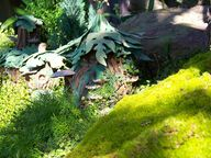Pixie Hollow house...