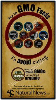 Top Ten GMO Foods to
