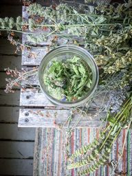 Summertime Nervines: Fresh and Dried Skullcap Tea Blend - Celia Linnemann