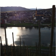 The Mosel. Steep, mu