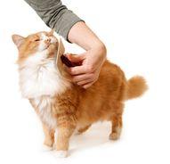 Cat Grooming:  10 Ti