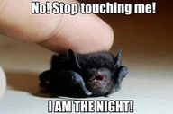 cute baby bat. happy
