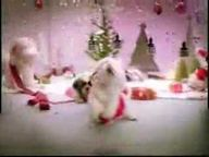 Dogs singing Christm