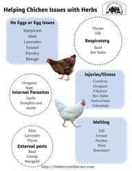 What Herbs Keep Chickens Healthy? - Timber Creek Farm