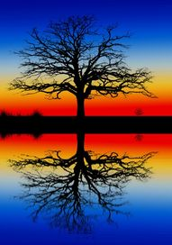 Tree of reflection