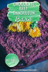 No-Bake Chocolate Beet Dandelion Bars (Vegan, Gluten-Free) - These easy and delicious no bake dessert bars are made with cacao powder, coconut flour, beet powder and fresh foraged dandelions for a fun and healthy springtime treat! Gluten-free, vegan, raw, + refined sugar-free. This is perfect dandelion flower recipe!