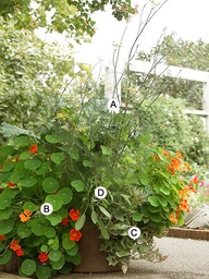 Backyard - Container Gardening
