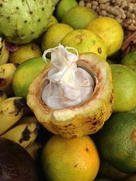 Cacao Nutritional Fa