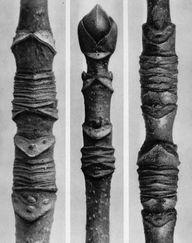 Karl Blossfeldt(1865-1932) est unphotographeallemand. Représentant de laNouvelle Objectivité(Neuen Sachlichkeit), il est connu pour son inventaire des formes et des structures végétales fondamentales.