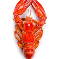 Four Jumbo Lobsters