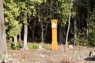 clock in woods...