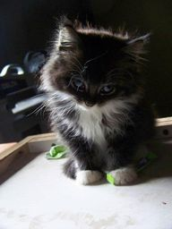 I know... I'm cute!