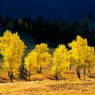 Fall color in the San Juan Mountains, CO