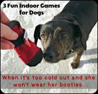 Try out our favorite fun indoor games for dogs. Theres a lot of winter left, these games will entertain your dogs while providing exercise for them and the pet parent.