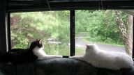 Two Cats and an RV -