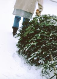 Kerstboom tips
