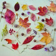 pretty autumnal leav
