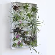 Airplant Frame...