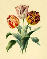 Vintage tulips art p
