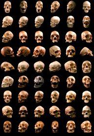 54 human skulls
