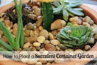 How to Plant a Succu