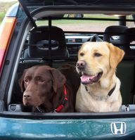 Best Cars For Dog Ow