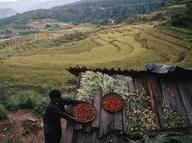 Bhutanese farmers st