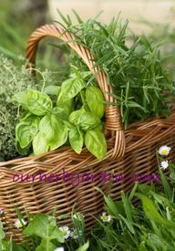 Our Herb Garden: gre