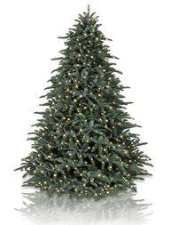 Noble Fir Christmas