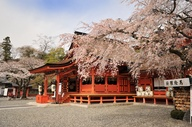 Photos of the Hanami