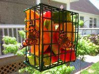 gardens / butterflies
